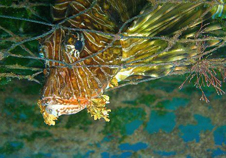 מבצע הניקוי הציל דגים