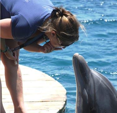אשת הדולפין