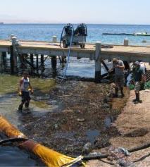 זיהום דלק סמוך ל'ריף הדולפינים'