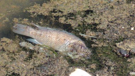 תמונות: זיהום ים במפרץ השמש