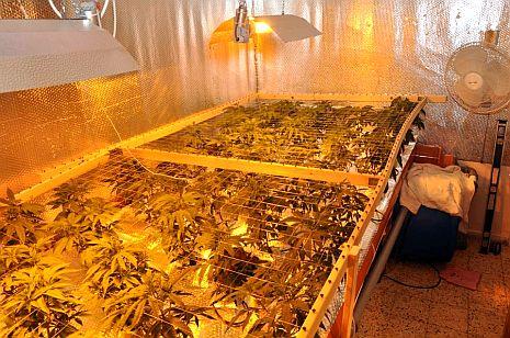 המשטרה: נחשפה מעבדה לגידול מריחואנה