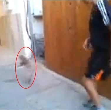 חשדות להתעללות בבעלי חיים