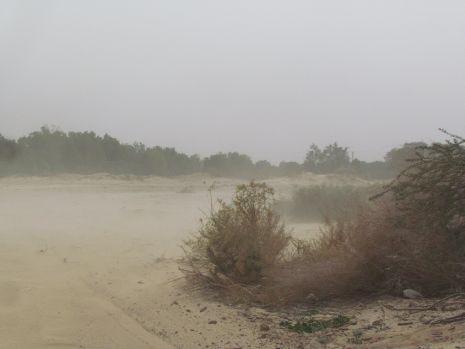 וידיאו: סופת חול בערבה