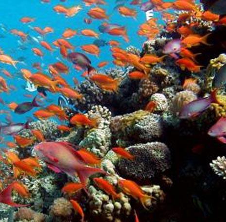 חוקרים קוראים לאו''ם להכריז על שונית האלמוגים באילת כאתר מורשת עולמית