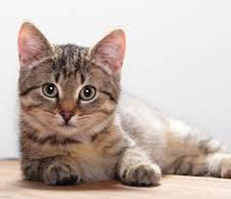 המנקה הותקף מכיוון שהשליך את גביע החלב של החתולים