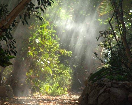 הגן הבוטני של אילת – פלא ירוק במדבר