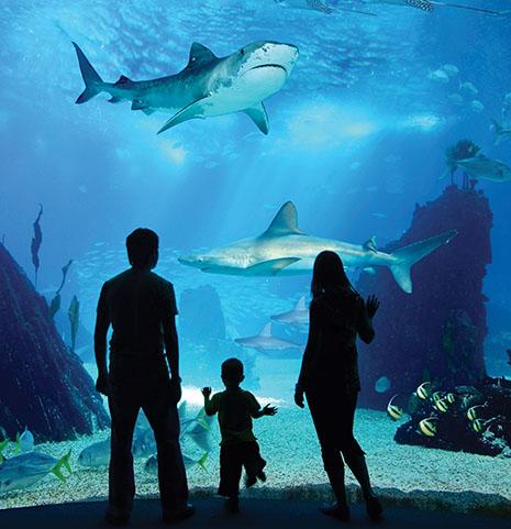 איך זה מרגיש לפגוש כריש? בסוף אוגוסט תדעו!