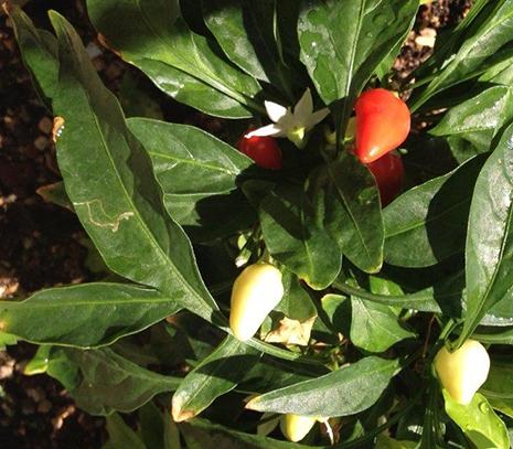 אוכל: לאכול את הגינה