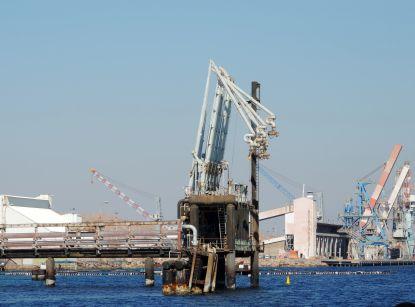 כתב אישום נגד קצא''א: פגעה באלפי אלמוגים בנמל הנפט