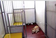 כלבים נגנבו מהכלביה העירונית