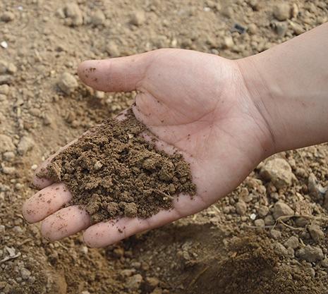 דשן אורגני - תוספת מצוינת לגינה שלכם