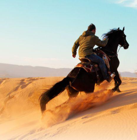על אנשים וסוסים