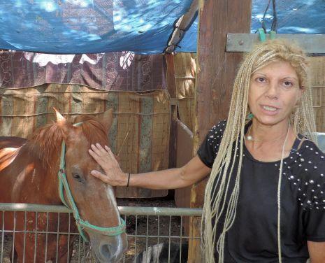 מתחם המזרקה: העירייה דורשת לפנות את חוות החיות