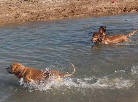 ילדים ובעלי חיים משכשכים בתעלת ביוב
