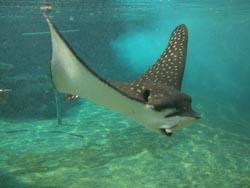 שמחה גדולה: עטלף הים 'ציון' חזר הביתה