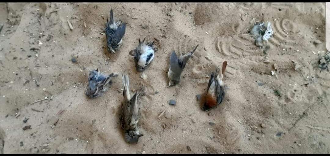 ציפורים נודדות מתות בסתר באילת