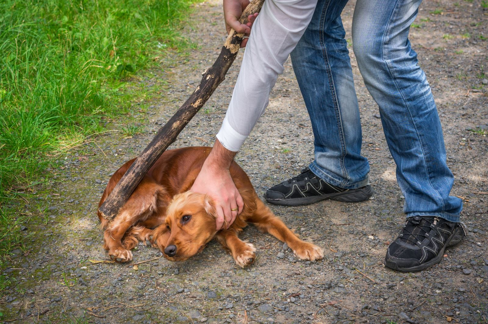 זה העונש שנגזר על הורג כלב בבעיטות אכזריות