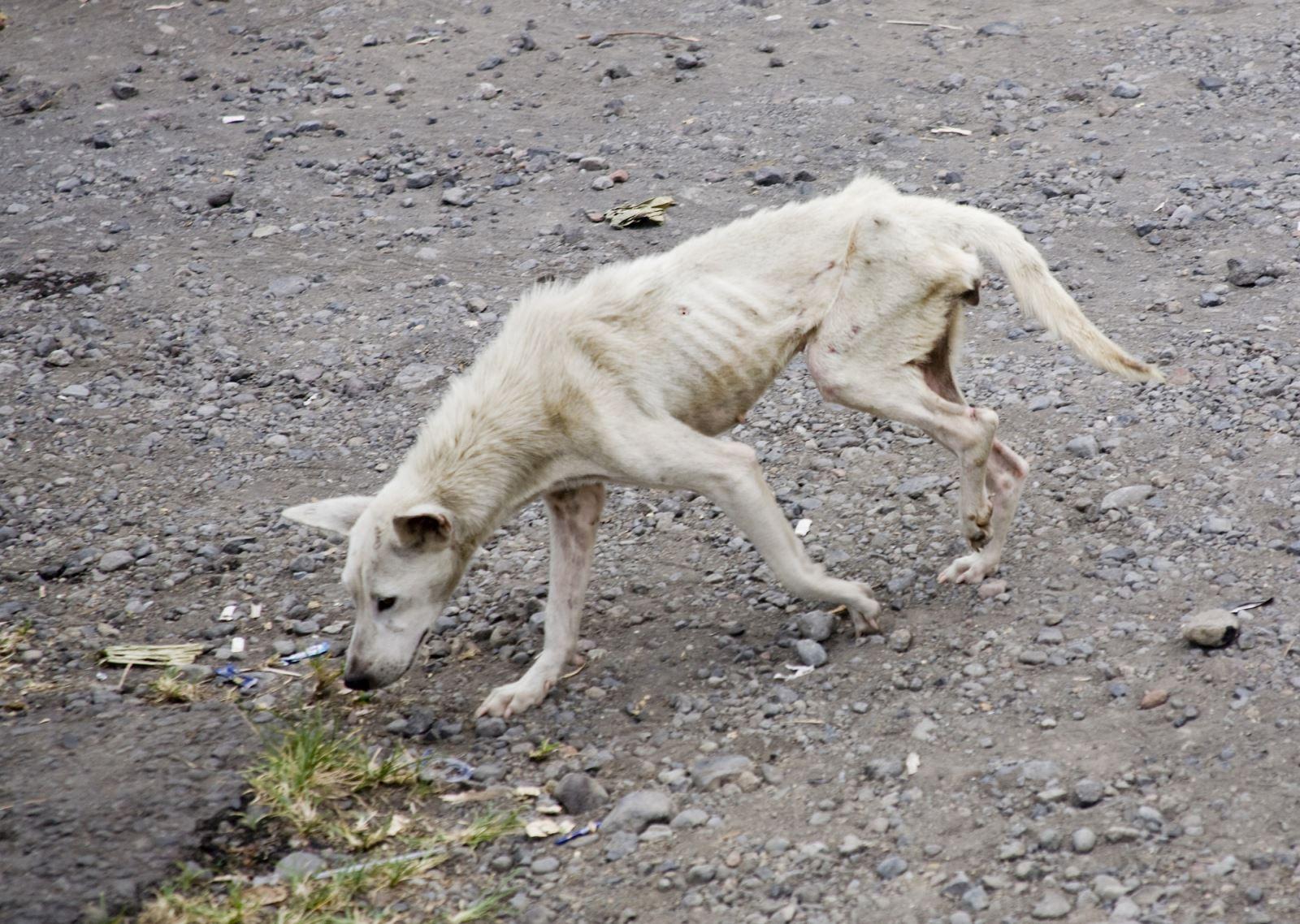 חשוד כי קשר את כלבו והרעיבו למוות