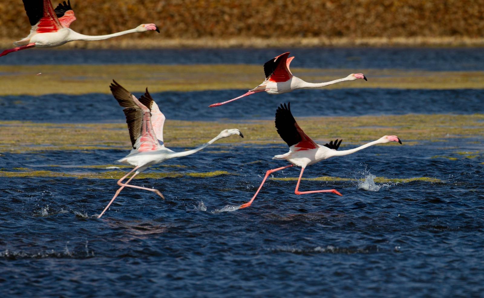 אירוע הצילום פלאנט ערבה יוצא לדרך בפעם השלישית-  צילומי טבע ונוף בערבה הדרומית