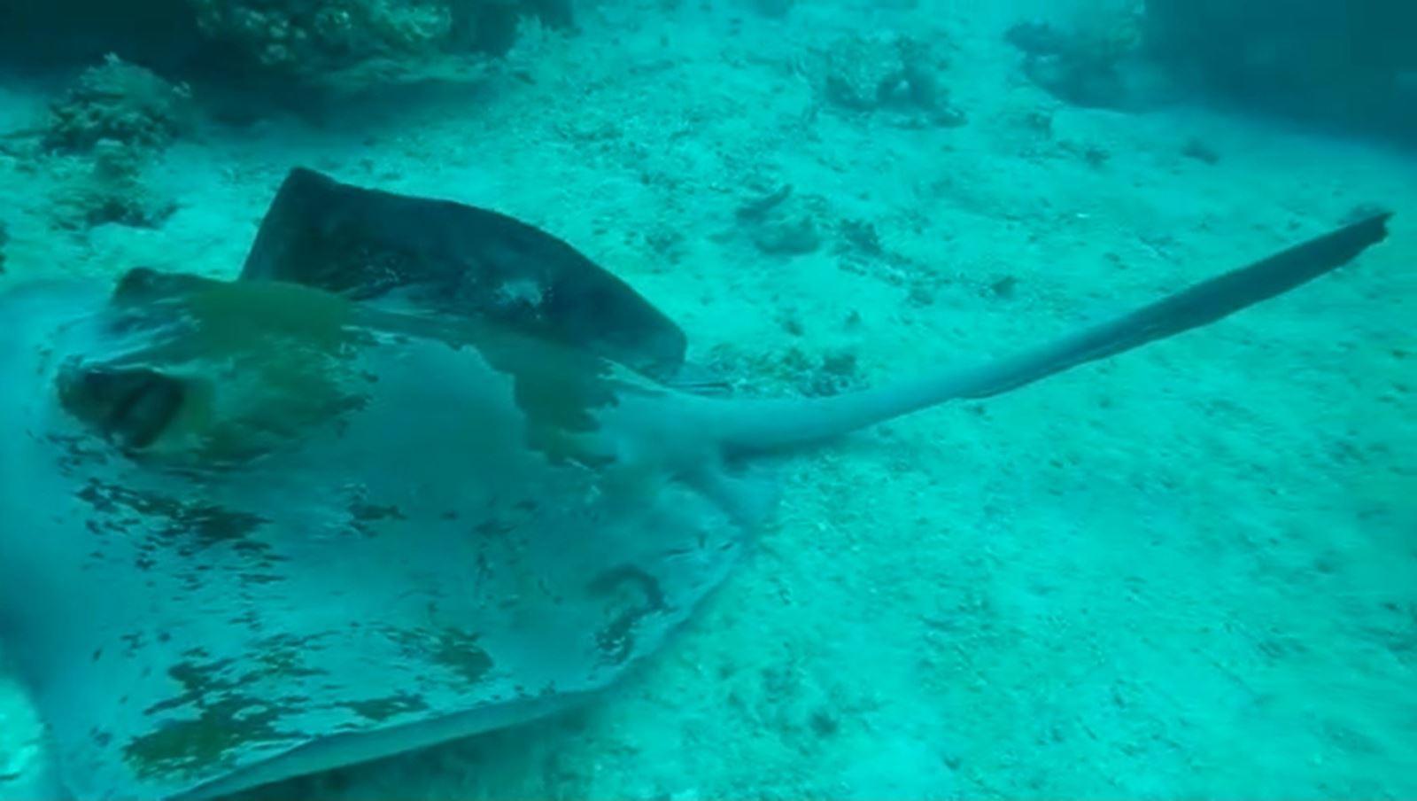 צפו: מפגן דו הקיום המושלם במפרץ אילת