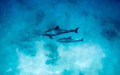 צפו: בשורות משמחות לאחר מותו של ניאו הדולפין