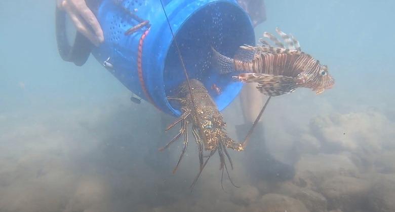 צפו: עשרות דגים מוגנים נשאבו וניצלו לאחר שזוהו בבור השאיבה והושבו על ידי פקחי רשות הטבע והגנים לים באילת