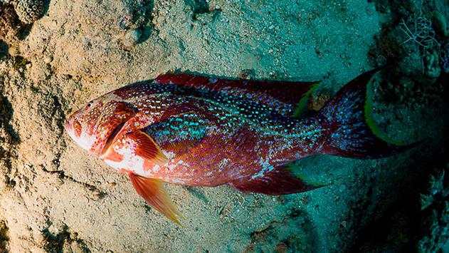 תופעה שלא נראתה כמוה: מאות דגים מתים במפרץ אילת