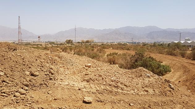 רשות ניקוז ערבה הרסה חורש טבעי של שיח בסכנת הכחדה: ''הכל נעשה באישור''