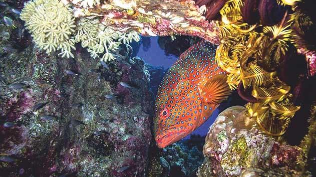 בניגוד למגמה בשנים קודמות שונית האלמוגים באילת החלה לגדול וטמפרטורת מי הים ירדה
