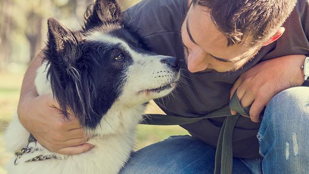 איבד את כלבו בגלל נופש באילת