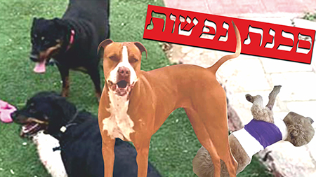 מכת תקיפות כלבים באילת
