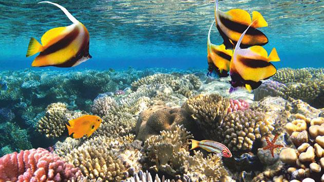 ''בהחלט ישנו סיכוי ששוניות האלמוגים באילת יוותרו האחרונות בעולם''