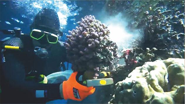 מאות אלמוגים הועתקו מחוף  קצא''א למקום מבטחים