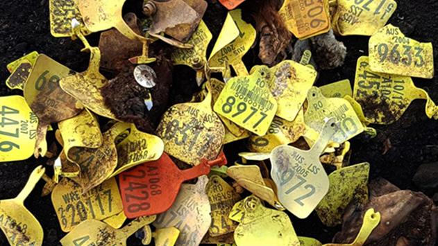 בית קברות פיראטי למשלוחים חיים התגלה בסמוך למושב צופר