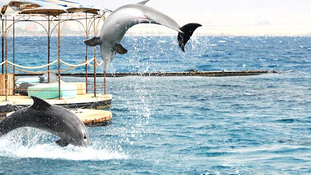 אחרי 30 שנה, ריף הדולפינים קיבל אישור מהוועדה המחוזית