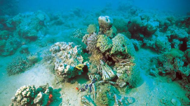 הירוקים מתנגדים להחלטת הממשלה לאשר השקעות בתחום החקלאות הימית באילת