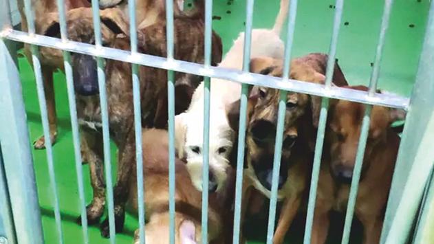 הכלבים של יורם לוי ז''ל לאימוץ