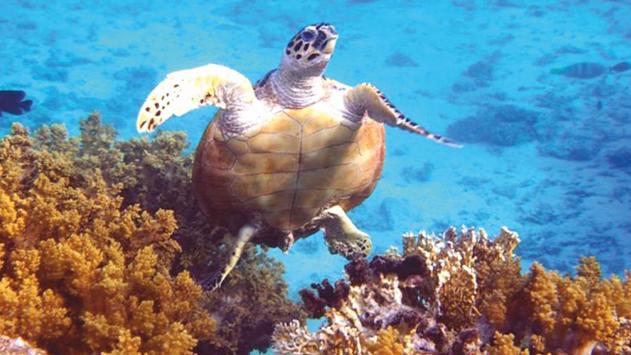 תכנה מיוחדת תסייע בהגנה על צבי הים במפרץ אילת