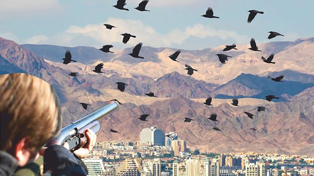 ההתאחדות הישראלית של ארגוני בעלי  החיים הכריזה מאבק נגד עיריית אילת