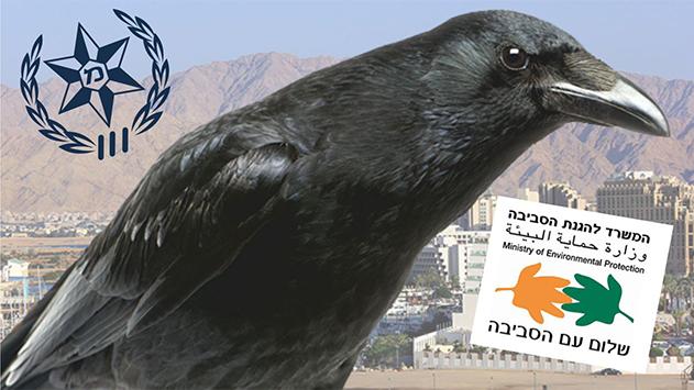 המשרד להגנת הסביבה ומשטרת  ישראל ממשיכים להתגושש  בסוגיית הירי בעורב ההודי
