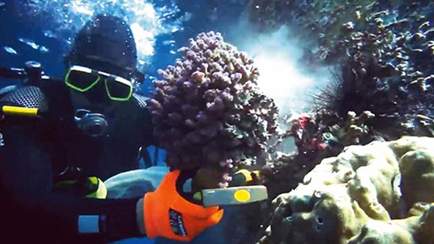 הורשעו בפגיעה באלפי אלמוגים בעת עבודות בחוף קצא''א