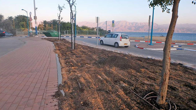 עיריית אילת תאלץ לעקור עצים  שנטעה בקרבת הים בחוף קצא''א