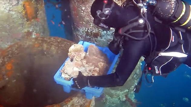 המחוזי: הקנסות שניתנו  לקצא''א באסון הפגיעה באלמוגים  מ-2014 נמוכים מדי