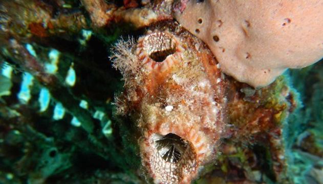 תגלית מסעירה במפרץ  אילת: בעל חיים ימי עם יכולת  חידוש איברים יוצאת דופן