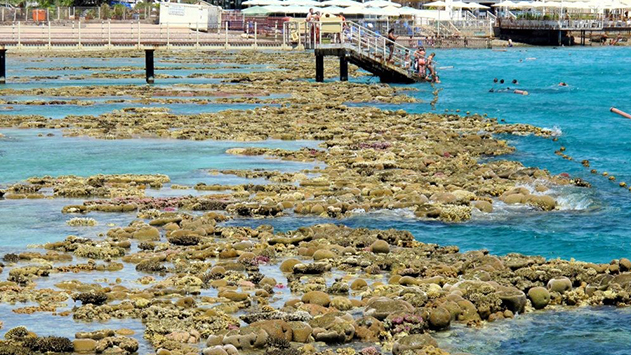 האם שלומן של שוניות האלמוגים  של מפרץ אילת יגבר על הפוליטיקה?
