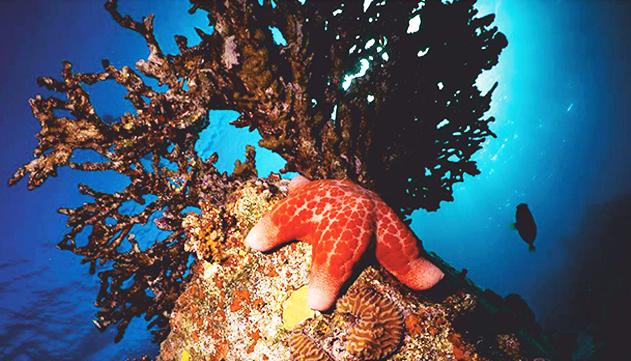 זוג גרגירנים מגושמים בשמורת האלמוגים